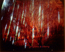 Sonoma rain Hologram by Nancy Gorglione and Greg Cherry